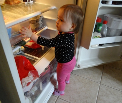 Toddler exploring the inside of a fridge