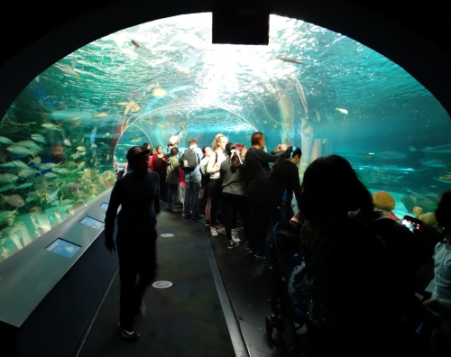 Underwater viewing tunnel exhibit at Ripley's Aquarium in Toronto