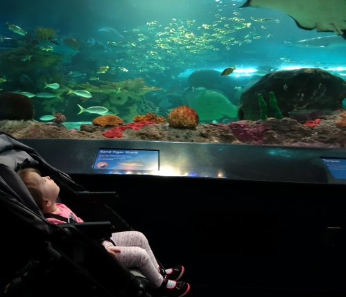 Toddler inside the underwater viewing tunnel exhibit at Ripley's Aquarium in Toronto