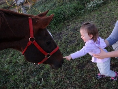 Toddler petting a horse